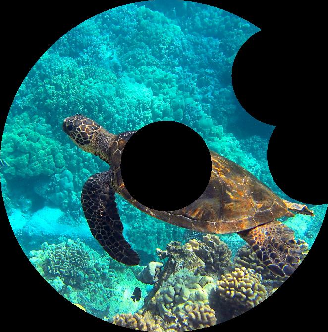 imagen-tortuga